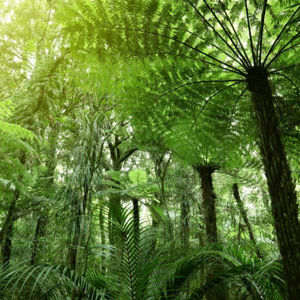 Lush green foliage in the tropical jungle